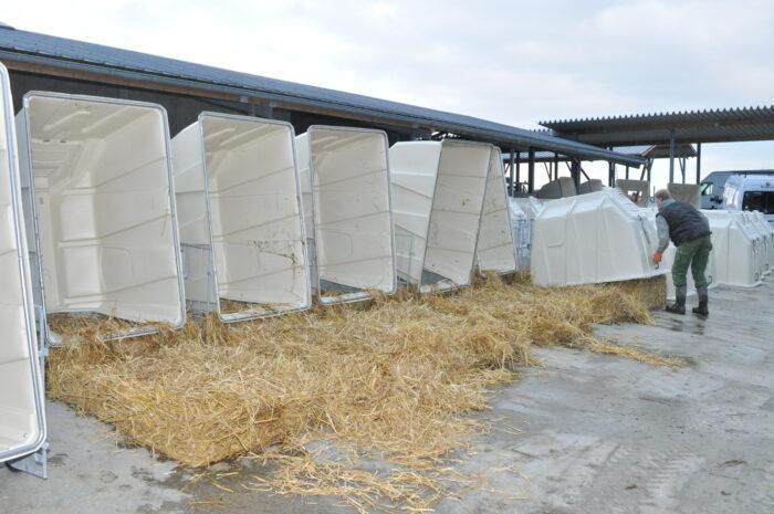 Hochgeklappte Hütten eines KälberGartens