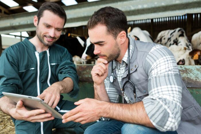 Landwirt zeigt dem Tierarzt seine tollen Ergebnisse im Kälberstall